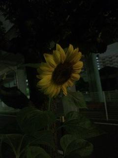 image-a4ac3.jpg